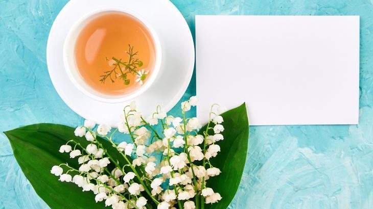 idosos que bebem chá