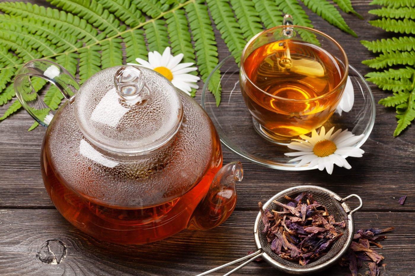 Chá de chapéu-de-couro: Conheça os benefícios - Cuidaí