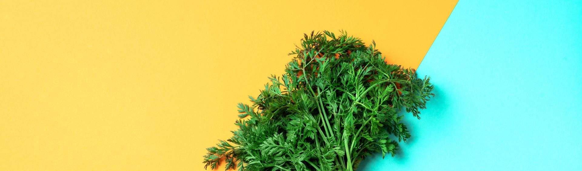 folhas de cenoura
