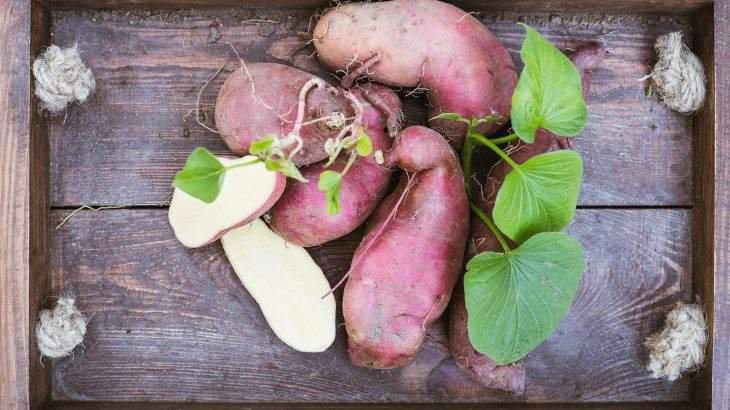 folhas de batata-doce