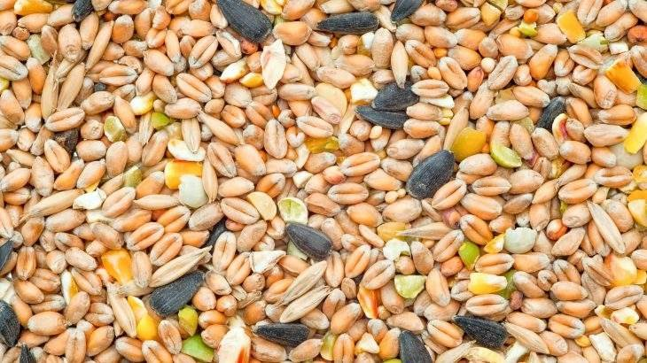 ciclo das sementes