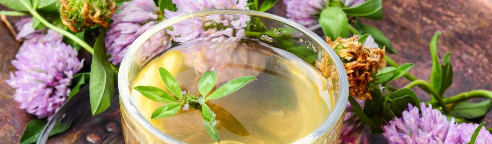 chá de cambará