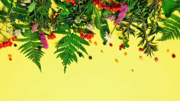 fitoterápicos para emagrecer